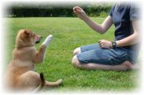 Dog Training Niche